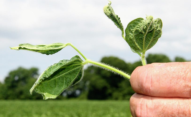 dicamba lawsuit dicamba lawsuits What is Dicamba