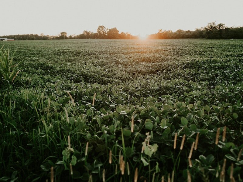 BASF Can't Skirt $250M In Dicamba Damages, Monsanto Says. Photo of plant field under the sky.